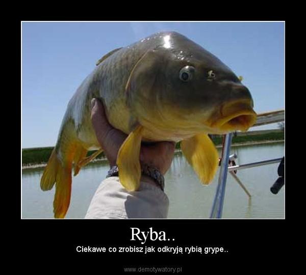 Ryba.. – Ciekawe co zrobisz jak odkryją rybią grype..
