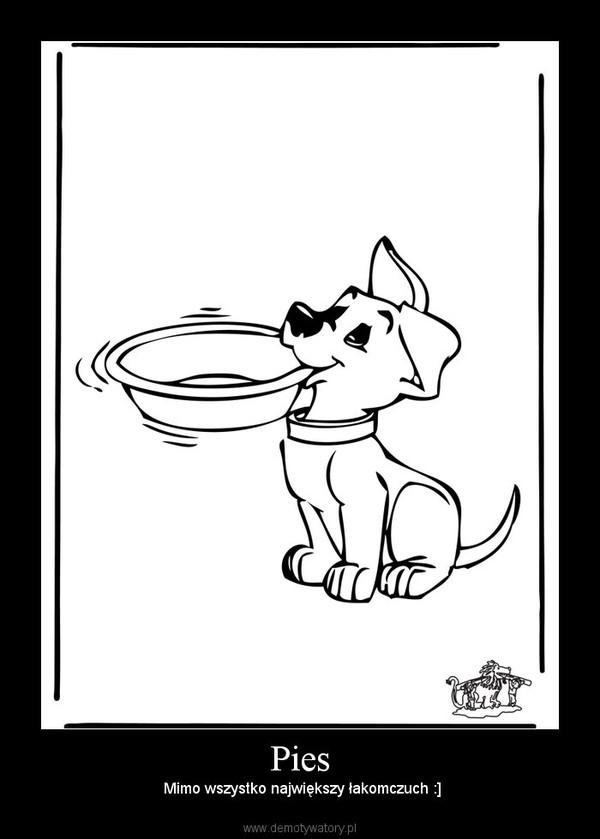 Pies –  Mimo wszystko największy łakomczuch :]