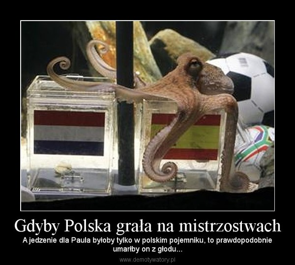 Gdyby Polska grała na mistrzostwach – A jedzenie dla Paula byłoby tylko w polskim pojemniku, to prawdopodobnieumarłby on z głodu...