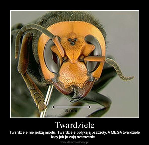Twardziele – Twardziele nie jedzą miodu. Twardziele połykają pszczoły. A MEGA twardzieletacy jak ja żują szerszenie...