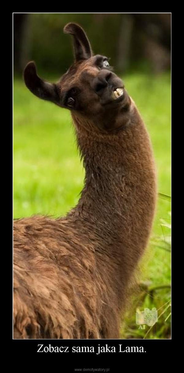Zobacz sama jaka Lama. –