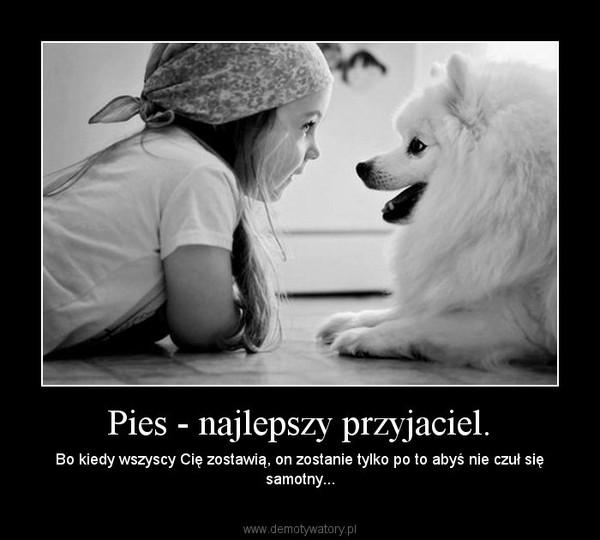 Pies Najlepszy Przyjaciel Demotywatorypl