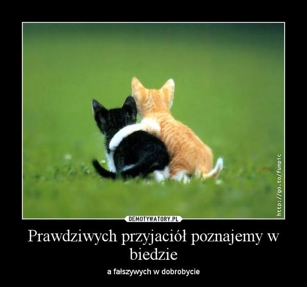 https://img6.dmty.pl//uploads/201207/1343483195_rvund4_600.jpg