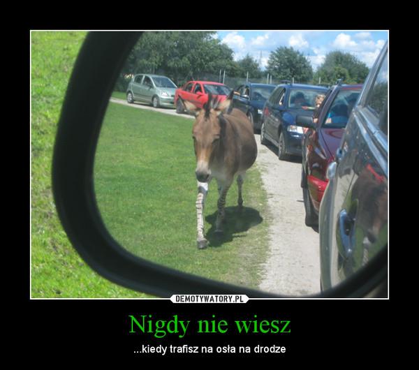 Nigdy nie wiesz – ...kiedy trafisz na osła na drodze