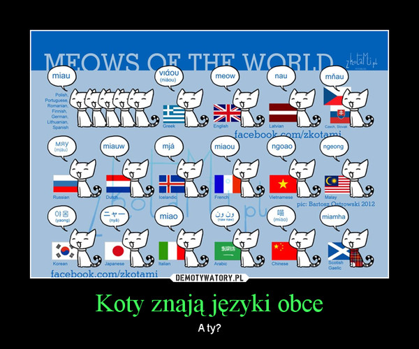 Koty znają języki obce – A ty?