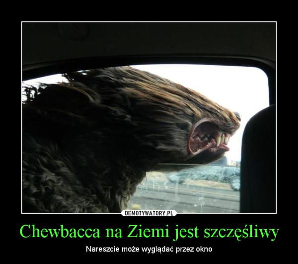 Chewbacca na Ziemi jest szczęśliwy – Nareszcie może wyglądać przez okno