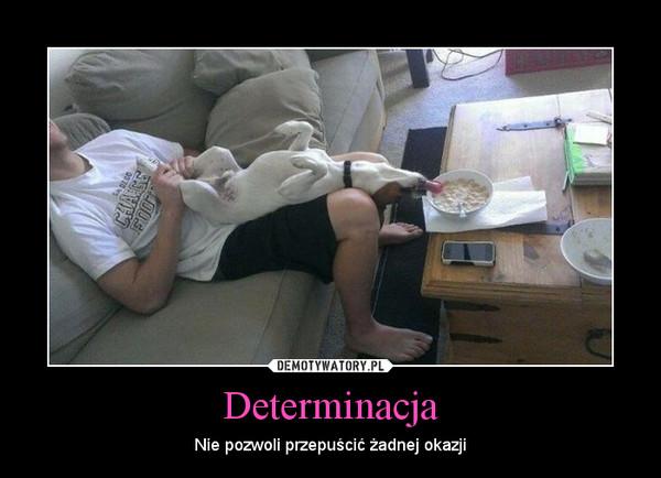Determinacja – Nie pozwoli przepuścić żadnej okazji