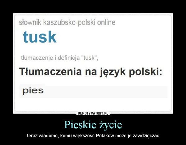 Pieskie życie – teraz wiadomo, komu większość Polaków może je zawdzięczać