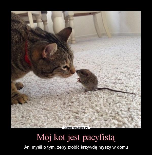 Mój kot jest pacyfistą – Ani myśli o tym, żeby zrobić krzywdę myszy w domu