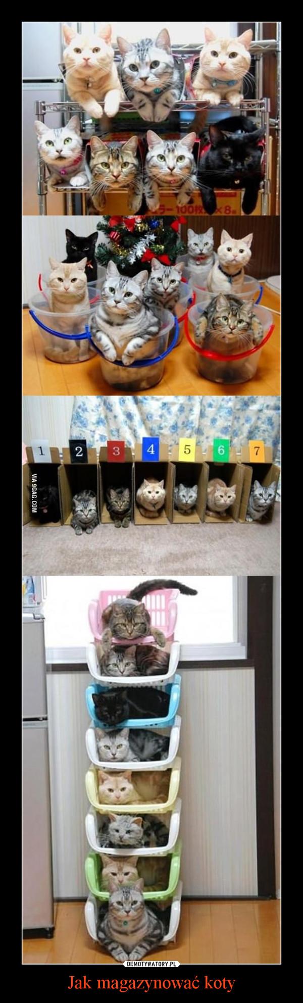 Jak magazynować koty –