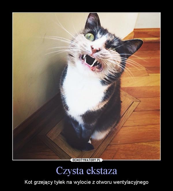 Czysta ekstaza – Kot grzejący tyłek na wylocie z otworu wentylacyjnego