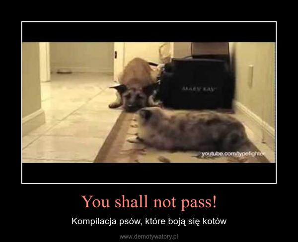You shall not pass! – Kompilacja psów, które boją się kotów