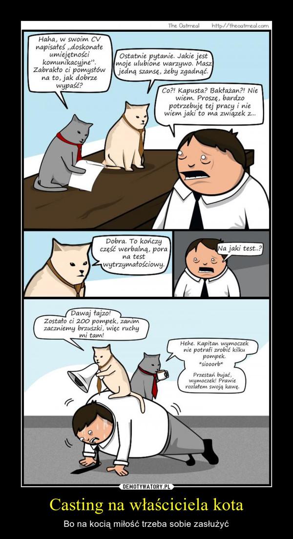 Casting na właściciela kota – Bo na kocią miłość trzeba sobie zasłużyć