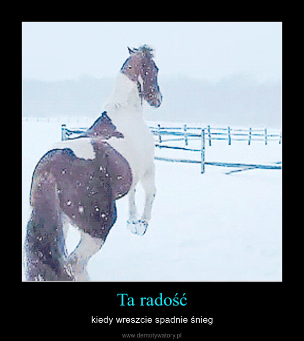 Ta radość – kiedy wreszcie spadnie śnieg