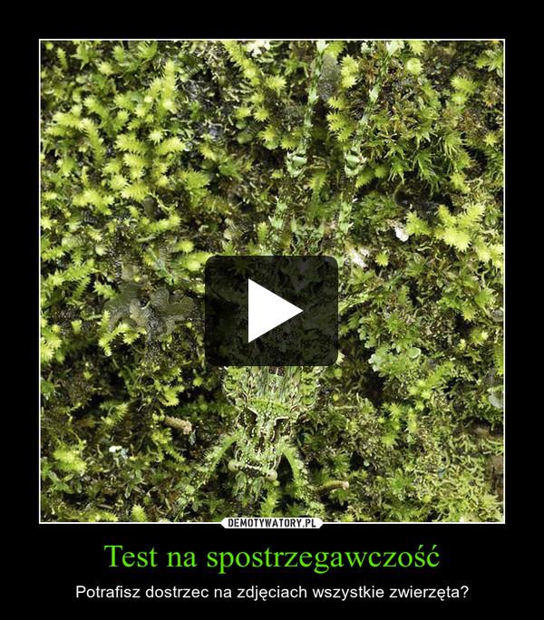 Test na spostrzegawczość – Potrafisz dostrzec na zdjęciach wszystkie zwierzęta?