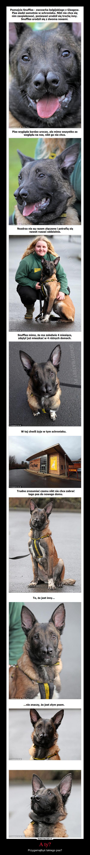 A ty? – Przygarnąłbyś takiego psa?
