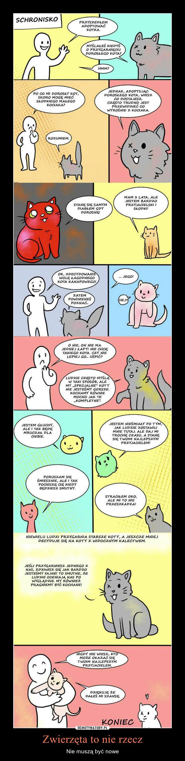 Zwierzęta to nie rzecz – Nie muszą być nowe