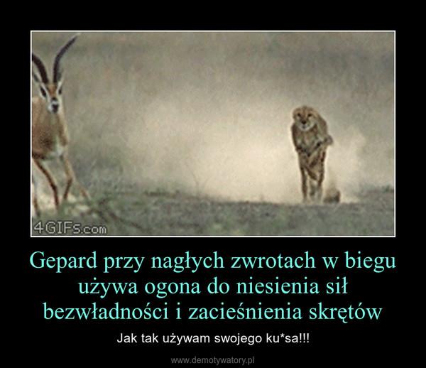 Gepard przy nagłych zwrotach w biegu używa ogona do niesienia sił bezwładności i zacieśnienia skrętów – Jak tak używam swojego ku*sa!!!