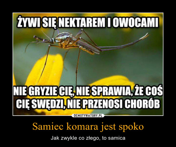 Samiec komara jest spoko – Jak zwykle co złego, to samica