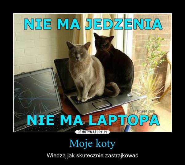 Moje koty – Wiedzą jak skutecznie zastrajkować