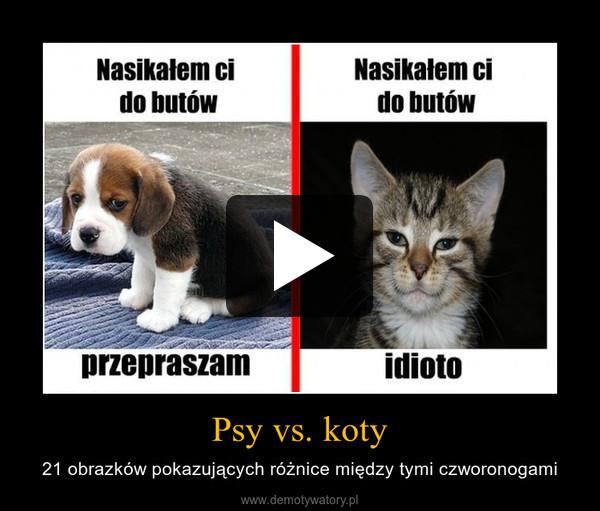 Psy vs. koty – 21 obrazków pokazujących różnice między tymi czworonogami
