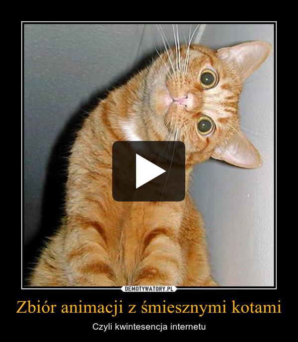 Zbiór animacji z śmiesznymi kotami – Czyli kwintesencja internetu