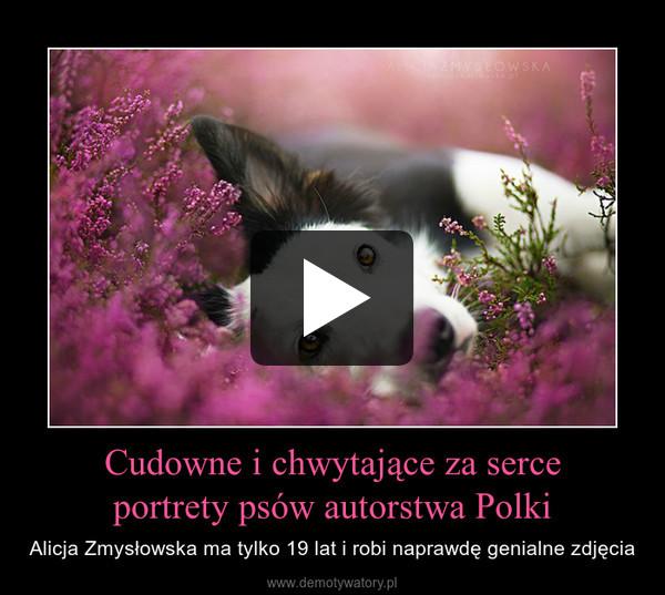 Cudowne i chwytające za serceportrety psów autorstwa Polki – Alicja Zmysłowska ma tylko 19 lat i robi naprawdę genialne zdjęcia