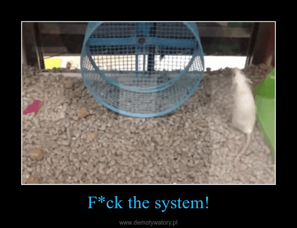 F*ck the system! –