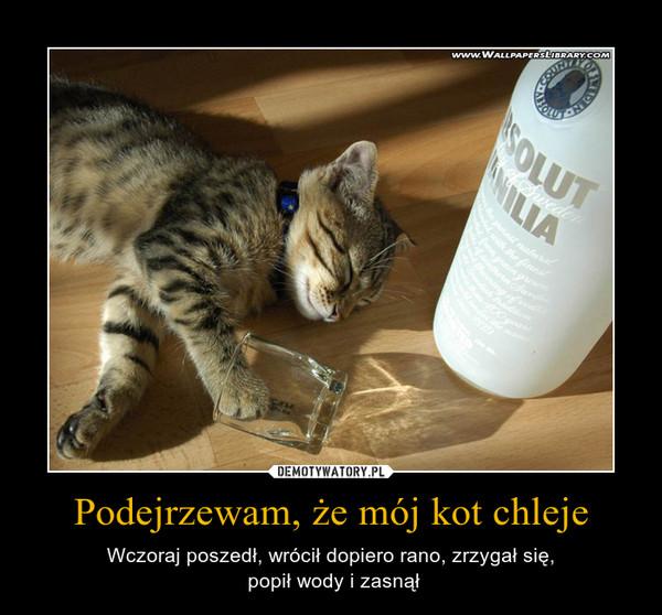 Podejrzewam, że mój kot chleje – Wczoraj poszedł, wrócił dopiero rano, zrzygał się, popił wody i zasnął