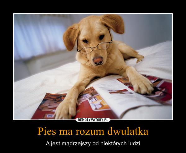Pies ma rozum dwulatka – A jest mądrzejszy od niektórych ludzi