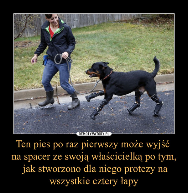 Ten pies po raz pierwszy może wyjść na spacer ze swoją właścicielką po tym, jak stworzono dla niego protezy na wszystkie cztery łapy –