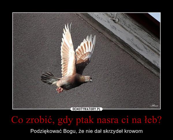 Co zrobić, gdy ptak nasra ci na łeb? – Podziękować Bogu, że nie dał skrzydeł krowom