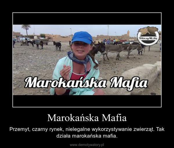 Marokańska Mafia – Przemyt, czarny rynek, nielegalne wykorzystywanie zwierząt. Tak działa marokańska mafia.