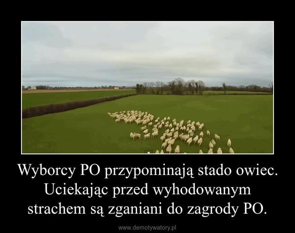 Wyborcy PO przypominają stado owiec. Uciekając przed wyhodowanym strachem są zganiani do zagrody PO. –