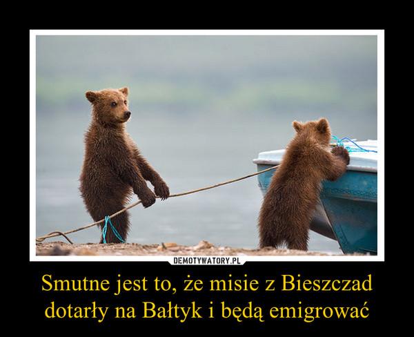 Smutne jest to, że misie z Bieszczad dotarły na Bałtyk i będą emigrować –