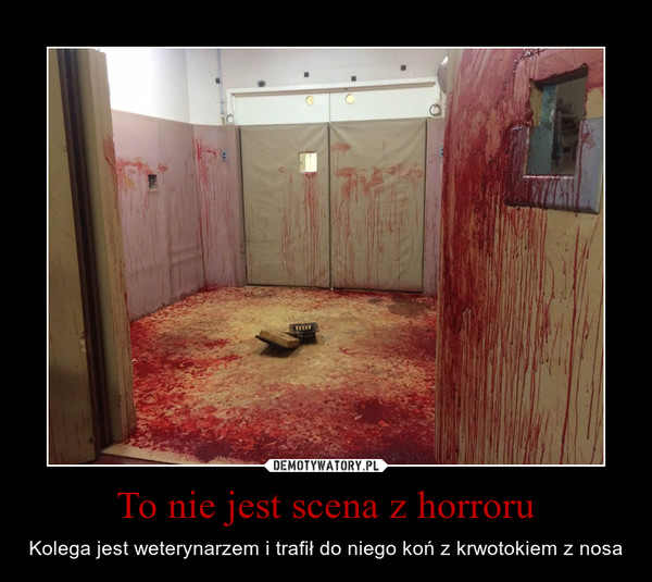 To nie jest scena z horroru – Kolega jest weterynarzem i trafił do niego koń z krwotokiem z nosa