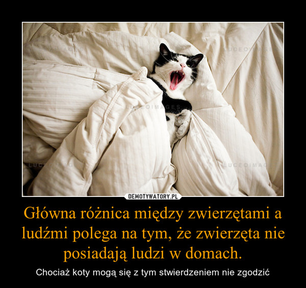 Główna różnica między zwierzętami a ludźmi polega na tym, że zwierzęta nie posiadają ludzi w domach. – Chociaż koty mogą się z tym stwierdzeniem nie zgodzić