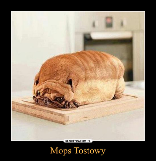 Mops Tostowy –