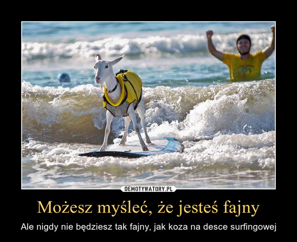Możesz myśleć, że jesteś fajny – Ale nigdy nie będziesz tak fajny, jak koza na desce surfingowej