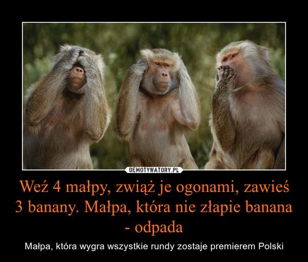 Weź 4 małpy, zwiąż je ogonami, zawieś 3 banany. Małpa, która nie złapie banana - odpada – Małpa, która wygra wszystkie rundy zostaje premierem Polski