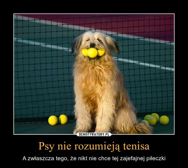 Psy nie rozumieją tenisa – A zwłaszcza tego, że nikt nie chce tej zajefajnej piłeczki