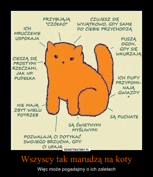 """Wszyscy tak marudzą na koty – Więc może pogadajmy o ich zaletach ICH MRUCZENIE USPOKAJA CIESZĄ SIĘ PROSTYMI RZECZAMI, JAK NP. PUDEŁKA PRZYSIJĄJĄ """"CZÓŁKO"""" CZUJESZ SIĘ WYJĄTKOWO, GDY SAME PO CIEBIE PRZYCHODZĄ NIE MAJĄ ZBYT WIELU POTRZEB SĄ ŚWIETNYMI MYŚLIWYMI POZWALAJĄ CI DOTYKAĆ SWOJEGO BRZUCHA, GDY CI UFAJĄ PUSZĄ OGON, GDY SIĘ WKURZAJĄ ICH DUPY PRZYPOMINAJĄ GWIAZDY SĄ PUCHATE"""