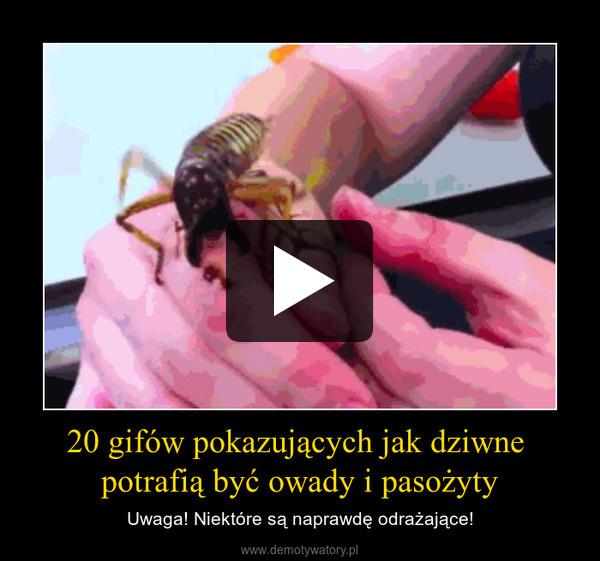 20 gifów pokazujących jak dziwne potrafią być owady i pasożyty – Uwaga! Niektóre są naprawdę odrażające!