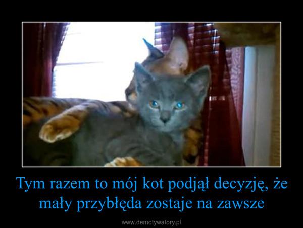 Tym razem to mój kot podjął decyzję, że mały przybłęda zostaje na zawsze –
