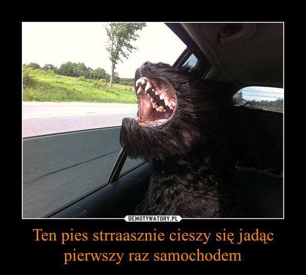 Ten pies strraasznie cieszy się jadąc pierwszy raz samochodem –