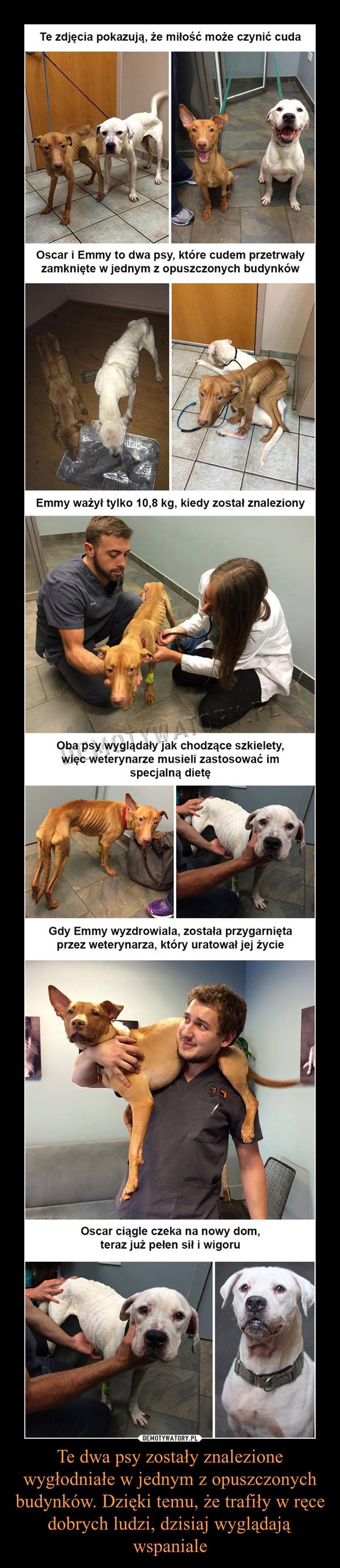 Te dwa psy zostały znalezione wygłodniałe w jednym z opuszczonych budynków. Dzięki temu, że trafiły w ręce dobrych ludzi, dzisiaj wyglądają wspaniale –