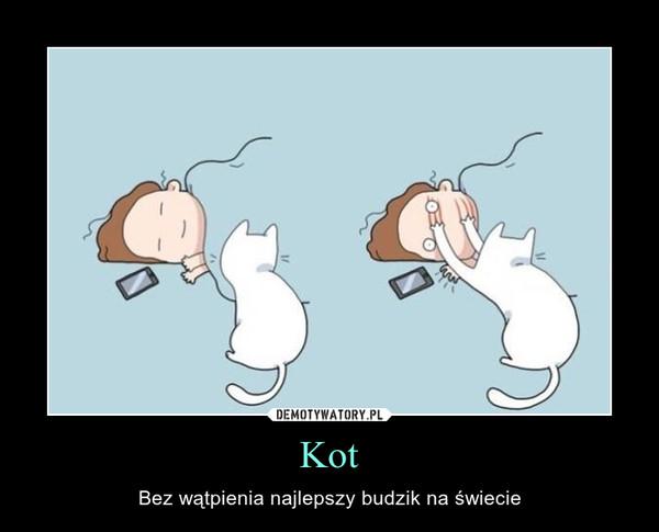 Kot – Bez wątpienia najlepszy budzik na świecie