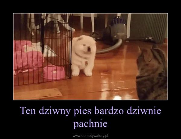 Ten dziwny pies bardzo dziwnie pachnie –