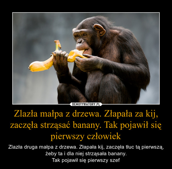 Zlazła małpa z drzewa. Złapała za kij, zaczęła strząsać banany. Tak pojawił się pierwszy człowiek – Zlazła druga małpa z drzewa. Złapała kij, zaczęła tłuc tą pierwszą, żeby ta i dla niej strząsała banany.Tak pojawił się pierwszy szef