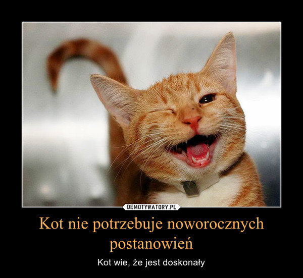 Kot nie potrzebuje noworocznych postanowień – Kot wie, że jest doskonały